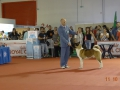 Best Puppy in Show.Brusco-GoldOnar