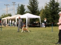 Gold Onar Akitas - Brusco's first Show