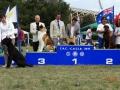 American Akitas Gold Onar Akitas-American Triumph Never Let You Go.jpg